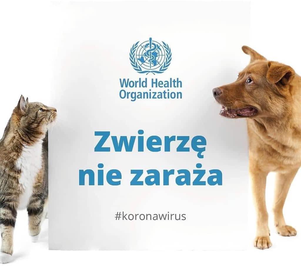 Koronawirus ⋆ Gabinet Weterynaryjny OSTOJA w Zawoni