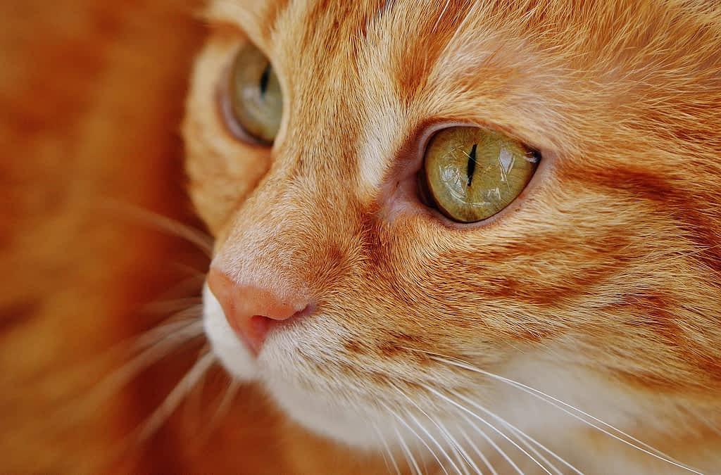 Dzień kota ⋆ Gabinet Weterynaryjny OSTOJA w Zawoni