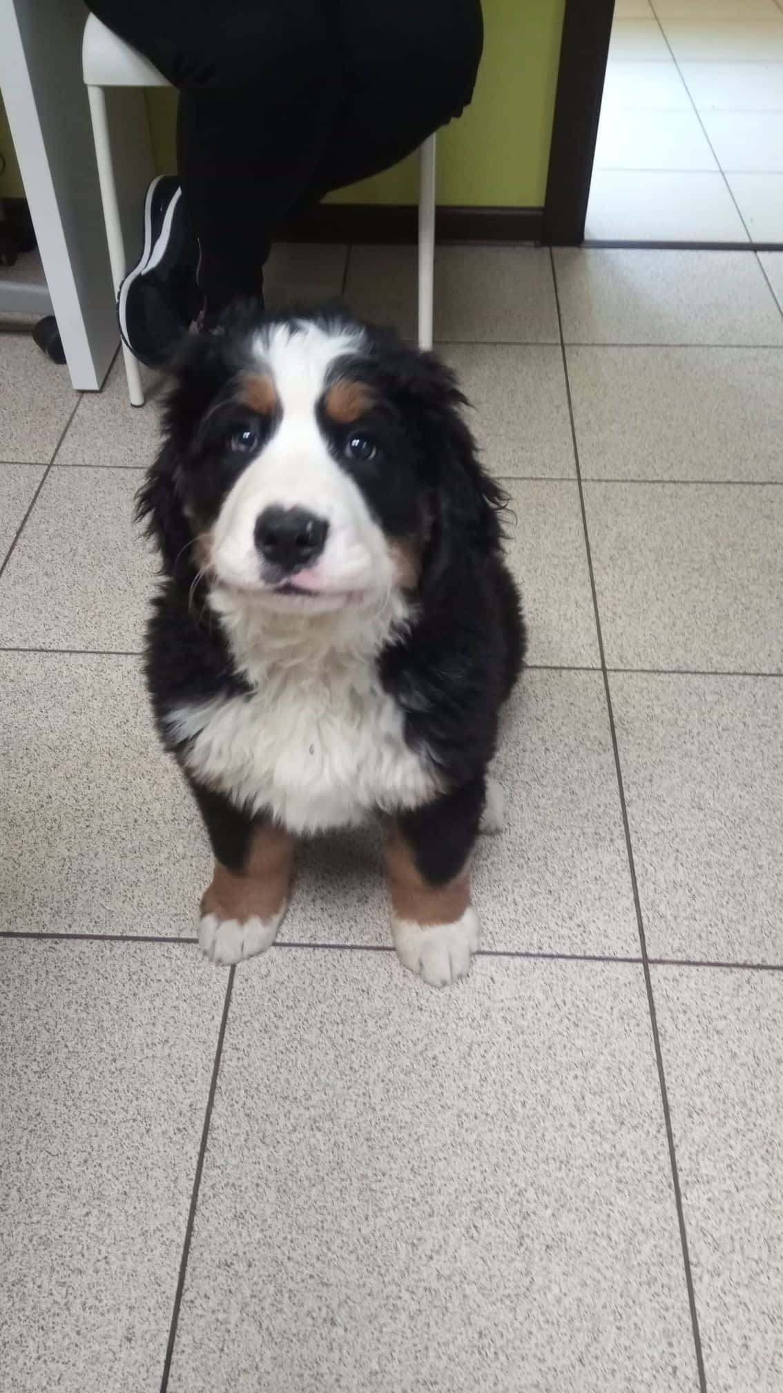 Dzień psa ⋆ Gabinet Weterynaryjny OSTOJA w Zawoni