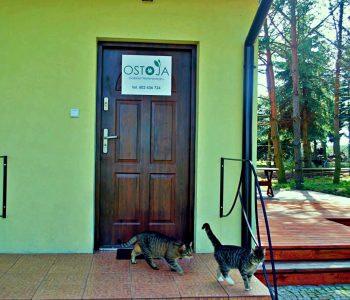 Na zewnątrz - Gabinet - Gabinet Weterynaryjny OSTOJA w Zawoni - Weterynarz Zawonia